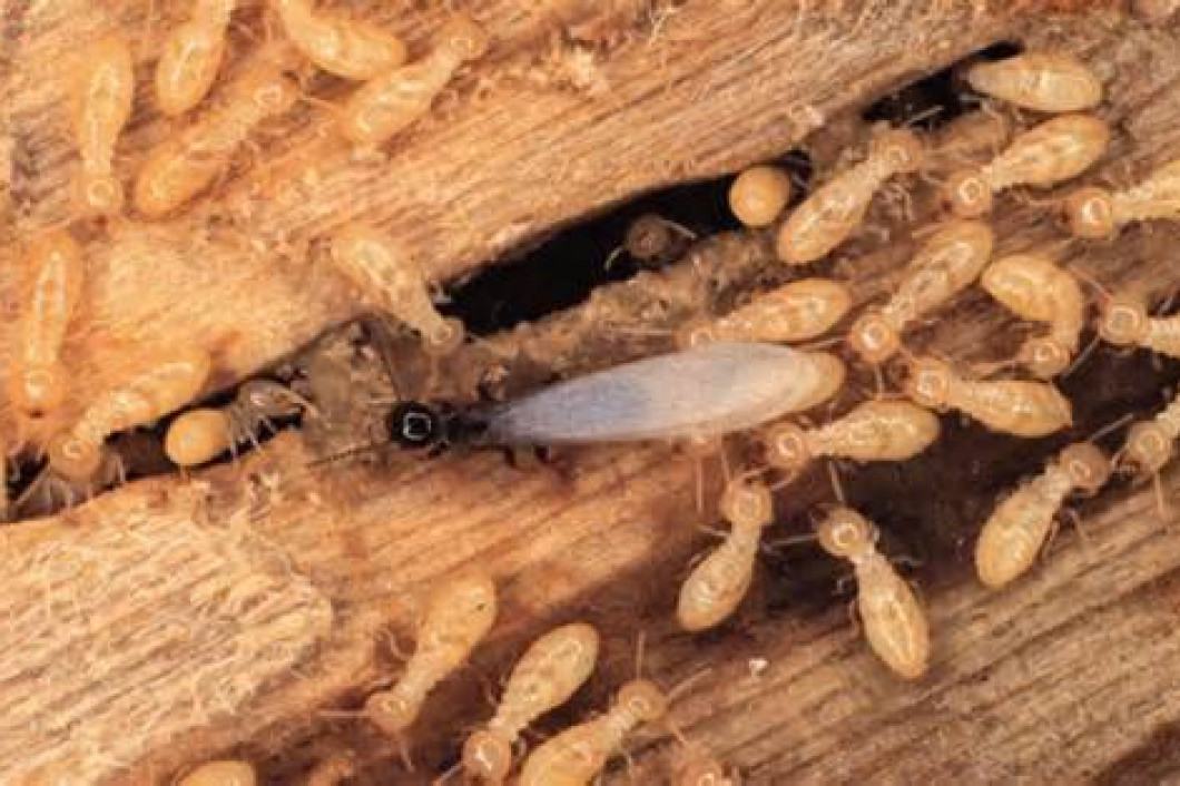 3 signs you have a termite problem